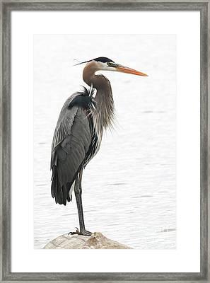 Standing Tall Framed Print by Anita Oakley