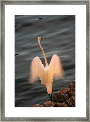 Framed Print featuring the photograph Standing Tall by Carol Kinkead
