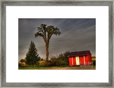 Standing Tall Framed Print by David Bishop