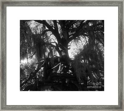 Standing Tall Framed Print by David Lee Thompson