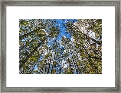 Standing Tall Framed Print by Marvin Spates