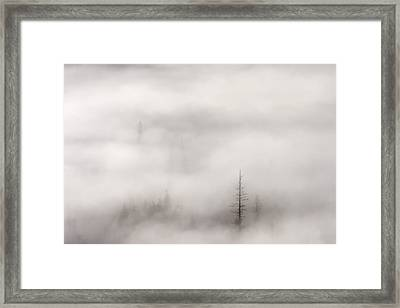 Standing Tall Framed Print by Mike  Dawson