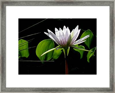 Framed Print featuring the photograph Standing Tall by Rosalie Scanlon