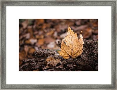 Standing Tall Framed Print by Tom Mc Nemar