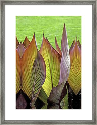 Standing Tall Tropicanna Leaves  Framed Print by Joe Darin