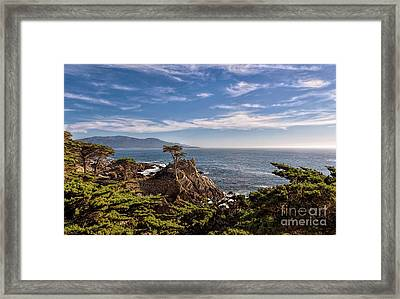 Standing Watch Framed Print by Gina Savage