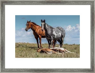 Standing Watch Over The Foals Framed Print