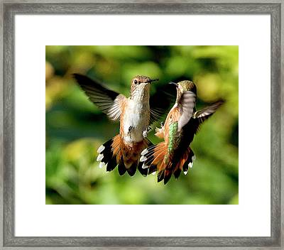 Standoff Framed Print by Sheldon Bilsker