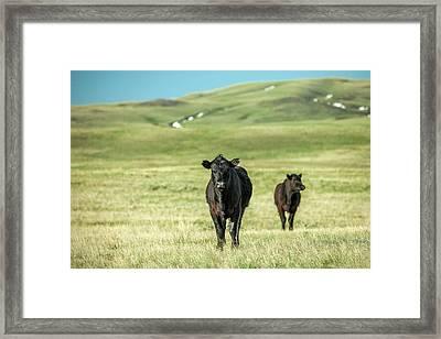 Standoff Framed Print by Todd Klassy