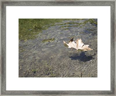 Stands Alone 2 Framed Print by Susanne Awbrey