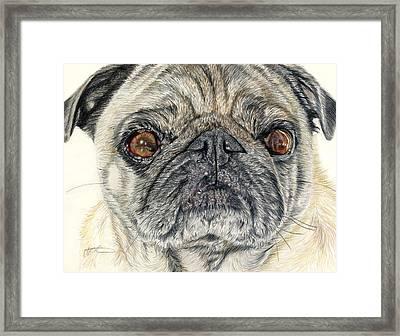 Stanley Framed Print by Joanne Stevens