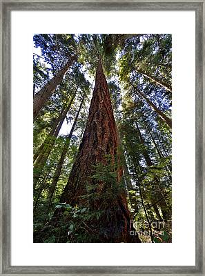 Stanley Park Giants Framed Print