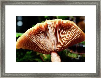 Stanley Park Mushroom Up Close Framed Print