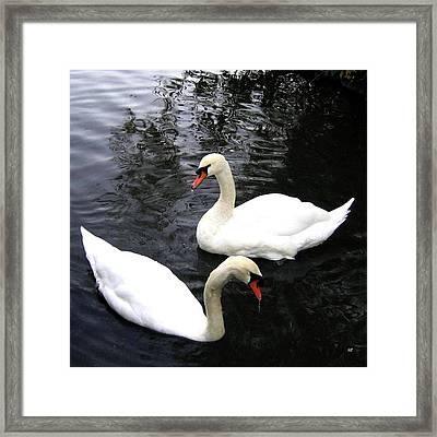 Stanley Park Swans Framed Print by Will Borden