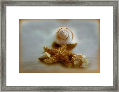 Star And Shells Framed Print by Linda Sannuti