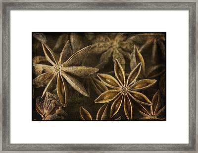 Star Anise Framed Print