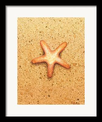 Starfish Framed Prints