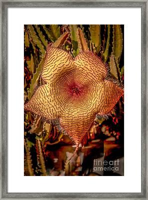 Star Flower Cactus Framed Print