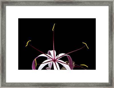 Framed Print featuring the photograph Star Flower by Ken Barrett