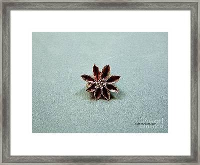 Star Flower Framed Print by Stan Mowatt
