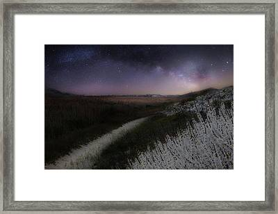 Framed Print featuring the photograph Star Flowers by Bill Wakeley