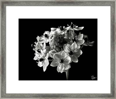 Star Of Bethlehem In Black And White Framed Print