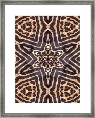 Star Of Cheetah Framed Print by Maria Watt