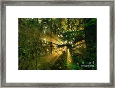 Star Of Light Framed Print by Adam Jewell