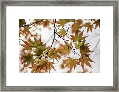 Star Of Tree  Framed Print by Hyuntae Kim