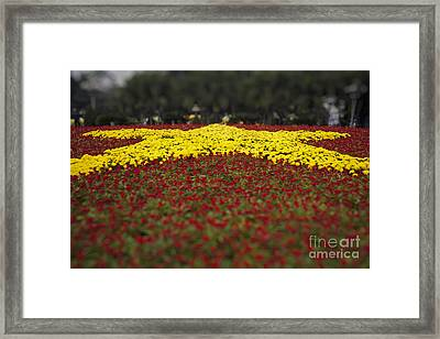 Star Of Vietnam Framed Print