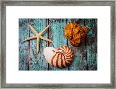 Star Shell Still Life Framed Print