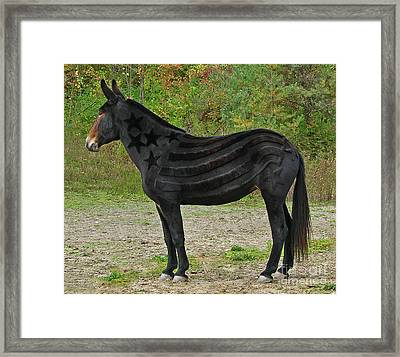 Framed Print featuring the photograph Star Spangled Mule by Deborah Johnson