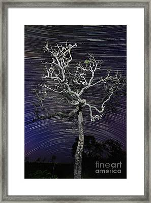 Star Trails In The Cerrado Framed Print