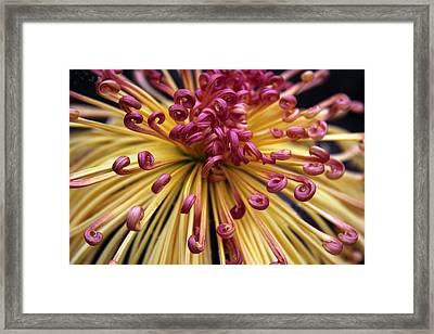 Starburst Framed Print by Jessica Jenney