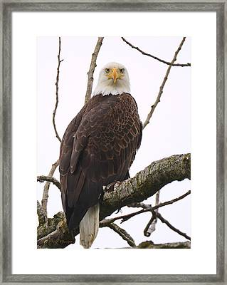 Stare Down Framed Print by Annie Pflueger