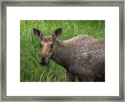 Stare Down Framed Print
