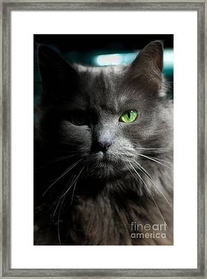 Stare Down Framed Print by Joann Vitali