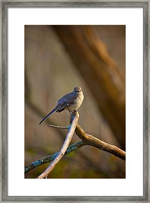 Stare Down Framed Print by Patrick Biestman