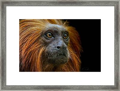 Stare Down Framed Print by Paul Neville