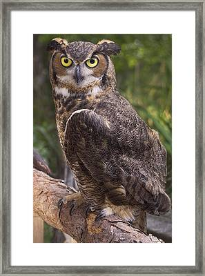 Stare Me Down Baby Framed Print