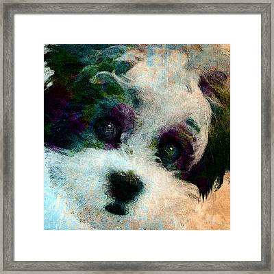 Stare Framed Print by Stacey Chiew