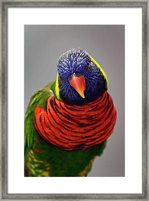 Stare You Down Framed Print
