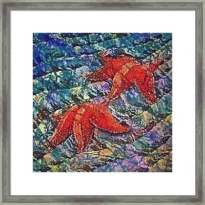Starfish 2 Framed Print by Sue Duda