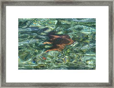 Framed Print featuring the photograph Starfish Abstract by Edward R Wisell