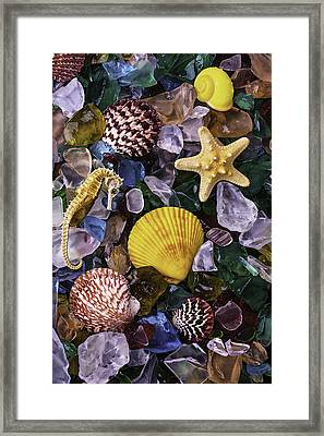Starfish And Sea Horse Framed Print by Garry Gay