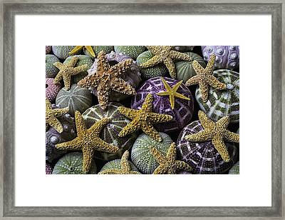 Starfish And Sea Urchins Framed Print by Garry Gay