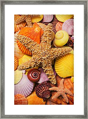 Starfish And Seashells  Framed Print by Garry Gay