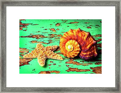 Starfish And Snail Shell Framed Print by Garry Gay