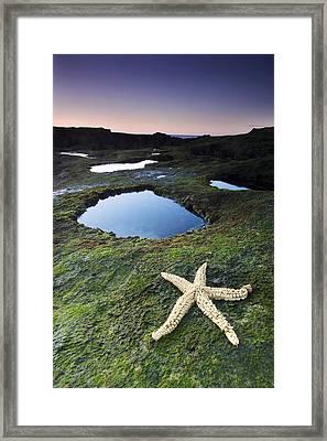 Starfish Framed Print by Andre Goncalves