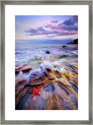 Starfish Framed Print